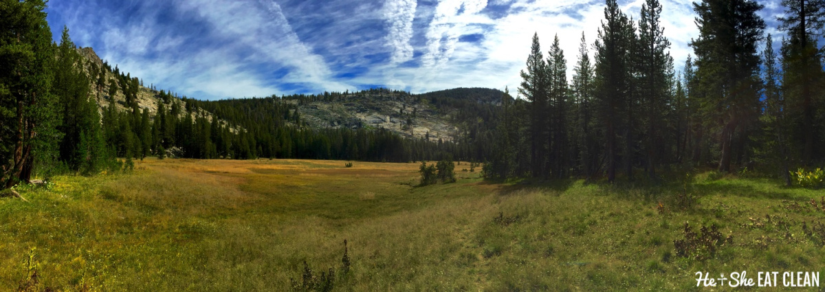 grassy meadow with mountains and trees: Half Moon Meadow in Yosemite National Park