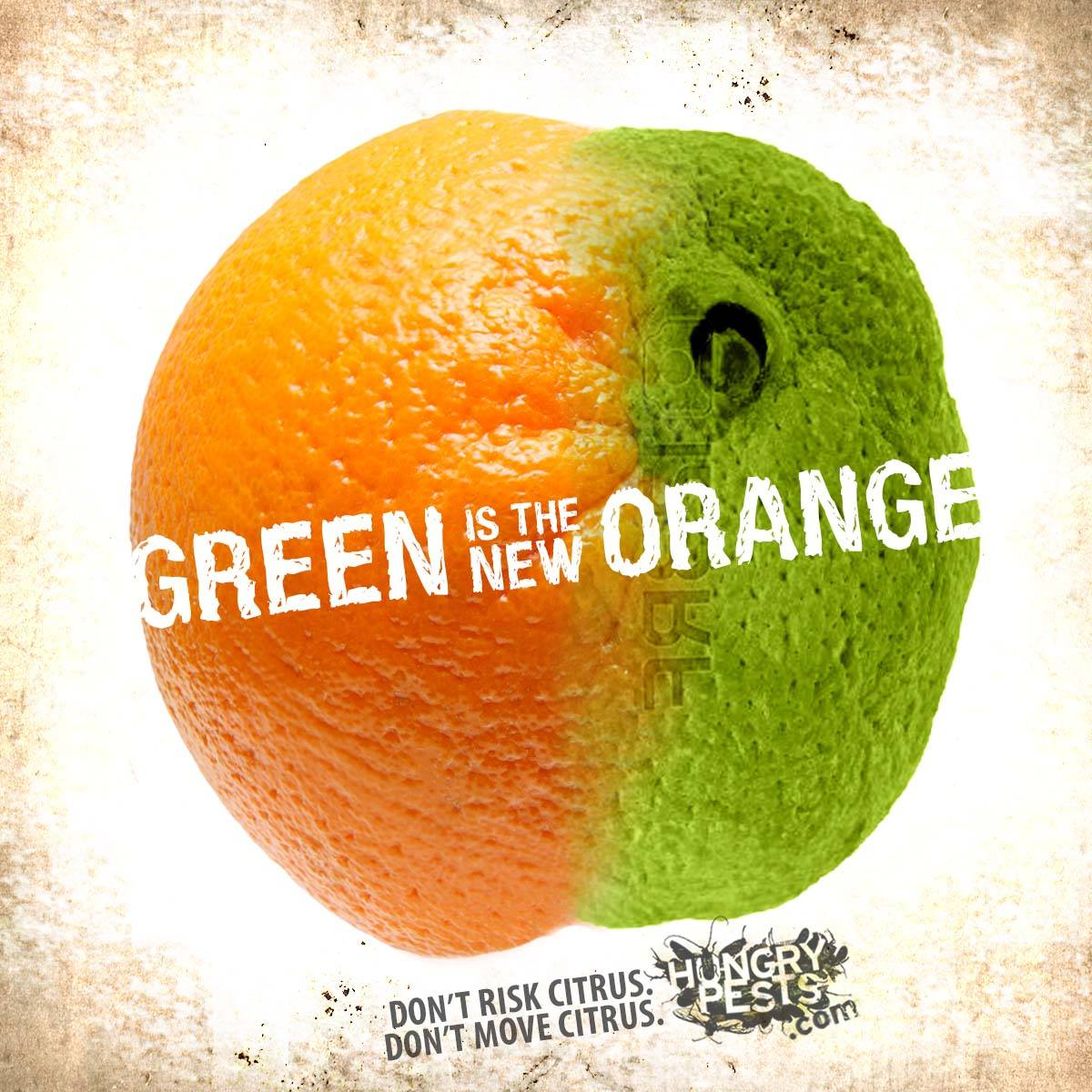 photo of an orange that is half green. text reads green is the new orange