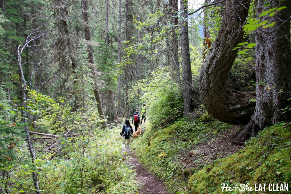 landscape photo of 3 female hikers in a forest on the Kindersley/Sinclair Loop