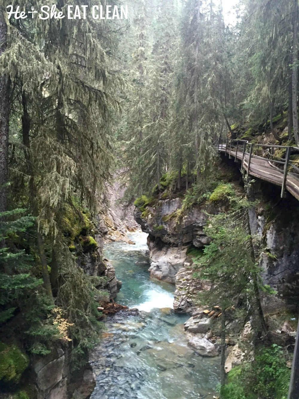 blue creek running through a forest at Johnston Canyon in Banff National Park