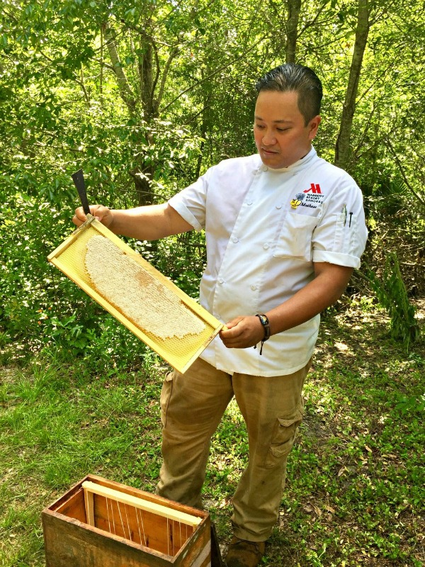 beekeeper with bees at Sawgrass Marriott Golf Resort & Spa