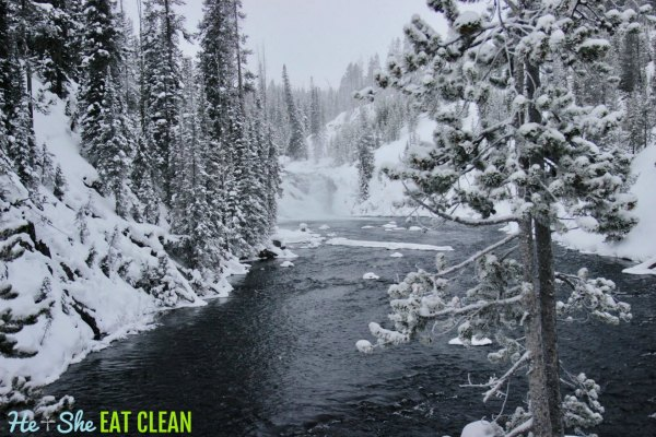 snow covered river and trees in Yellowstone National Park