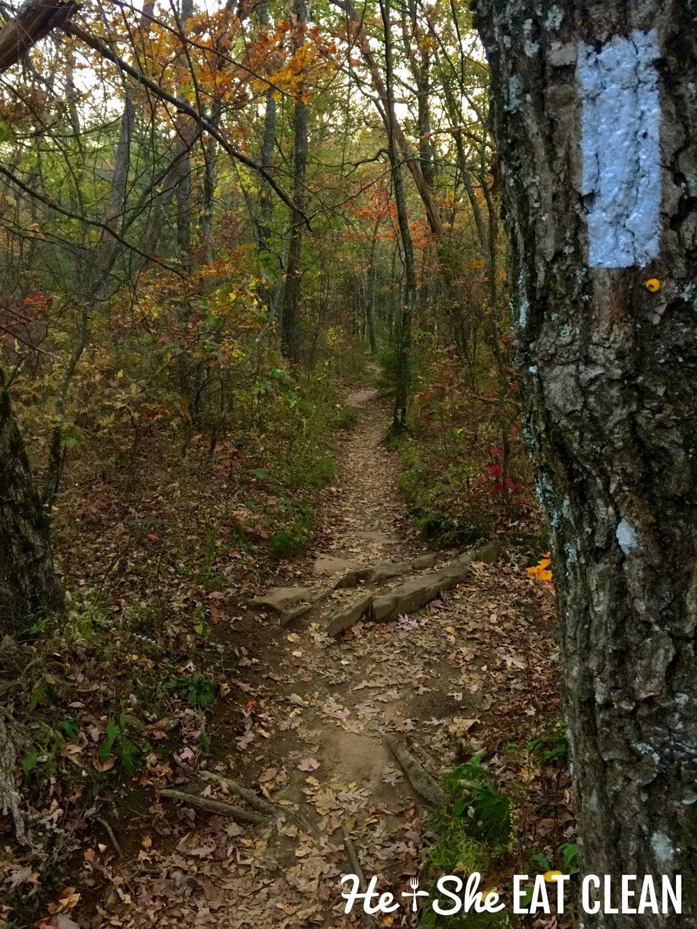 Hiking Blood Mountain on the Appalachian Trail in Georgia