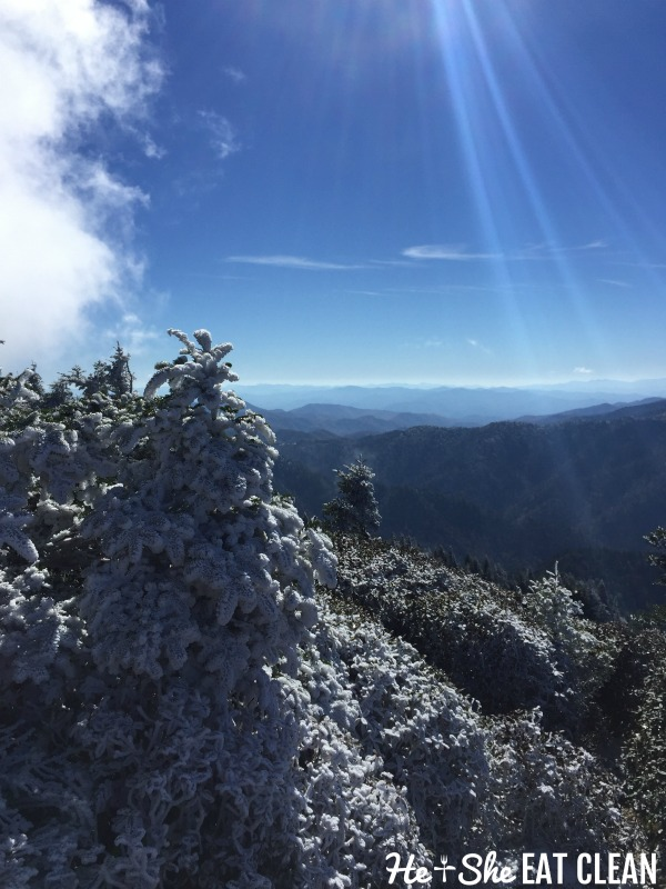 snow covered trees on the top of Mount LeConte