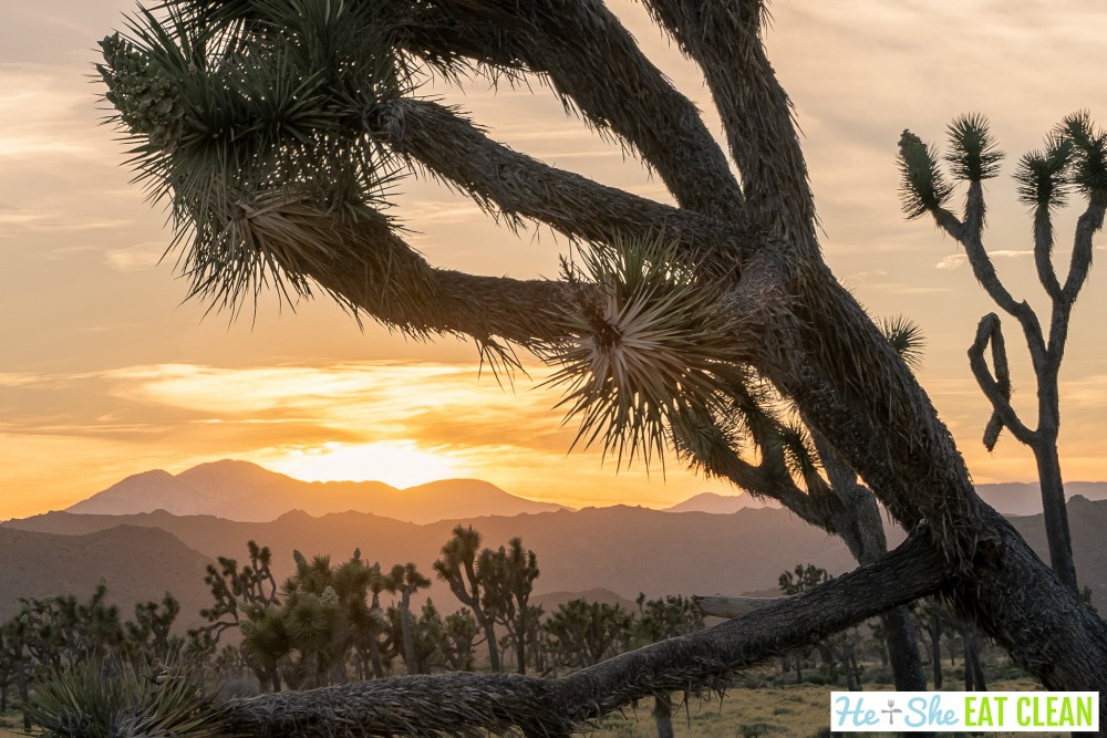 sunset in the desert with a joshua tree in the front
