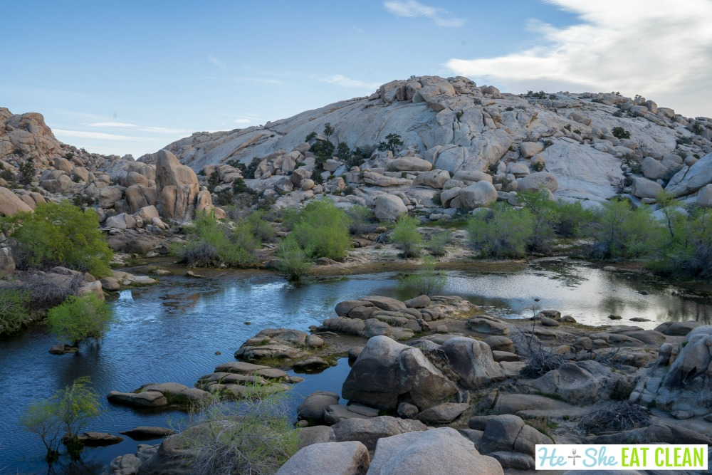 blue body of water with rocks and small green bushes in Joshua Tree National Park