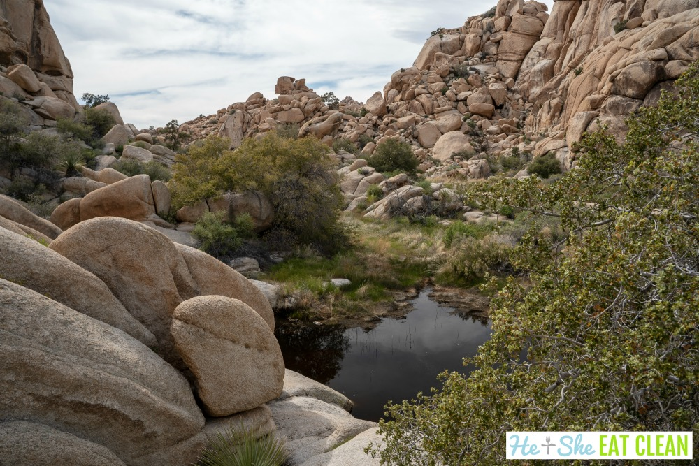 large boulders surrounding a body of water in Joshua Tree National Park