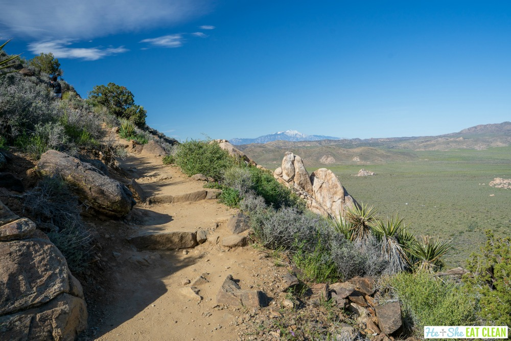 hiking trail with rocks and plants along the side and a mountain in the background on Ryan Mountain in Joshua Tree National Park