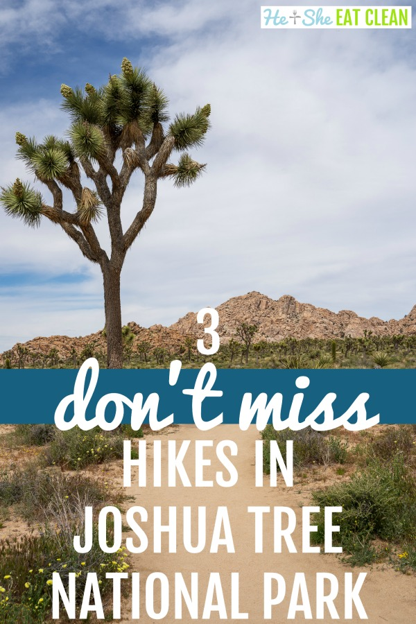dirt trail with a Joshua Tree on the left side text reads 3 don't miss hikes in Joshua Tree National Park