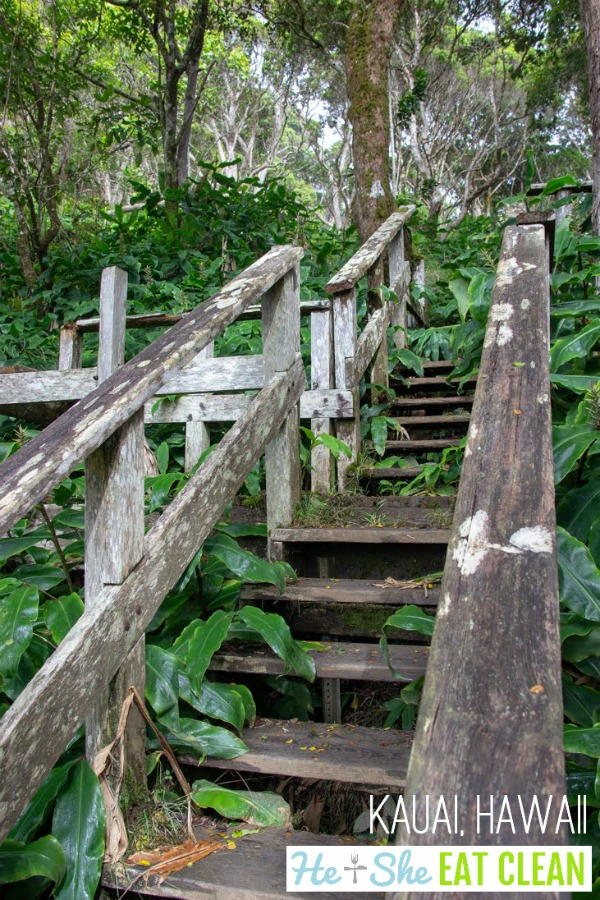 old wooden stairs in a rainforest with lush green landscape on the Alaka'i Swamp Trail in Kauai, Hawaii