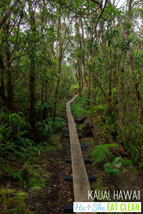 old wooden walkway in a rainforest with lush green landscape on the Alaka'i Swamp Trail in Kauai, Hawaii